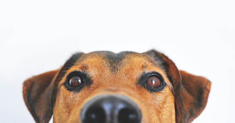 a close-up of a dog's face