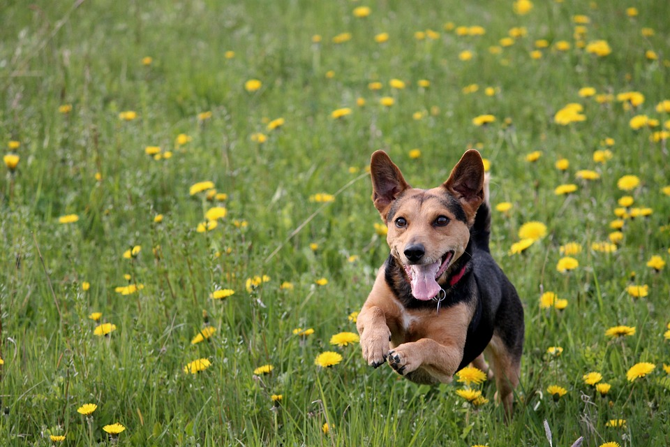 Doggy Diet: Tips to Increase Activity Time and Keep Your Pup Fit