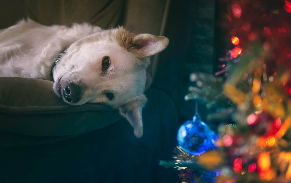 Keeping Your Dog Safe During Noisy New Year Celebrations