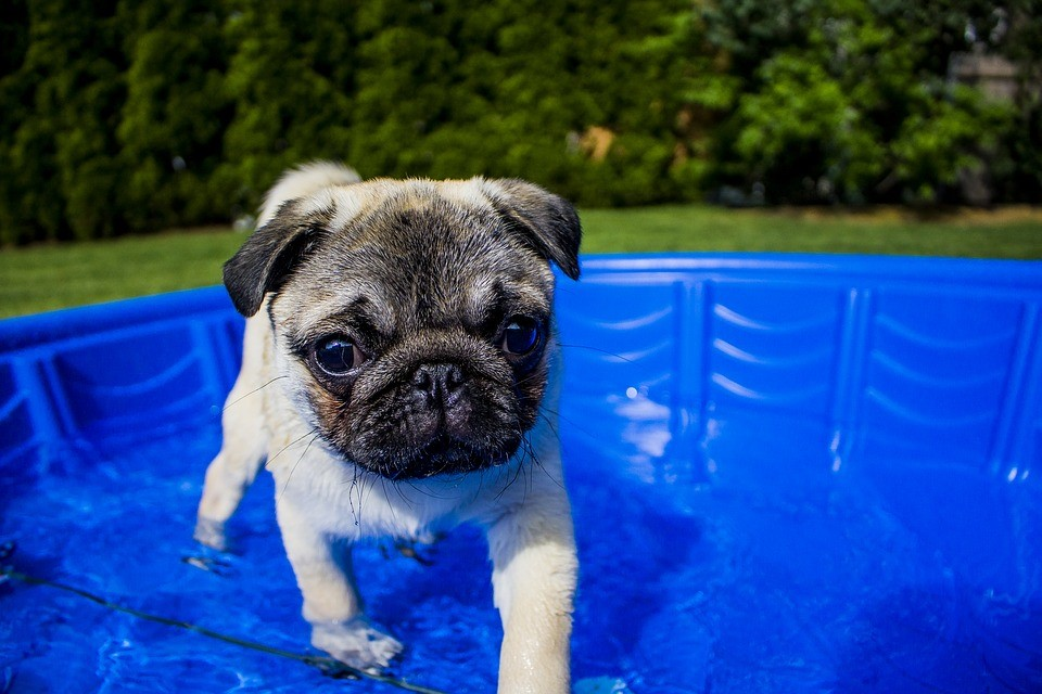 Staying Safe Outdoors This Summer: Tips for Your Pup