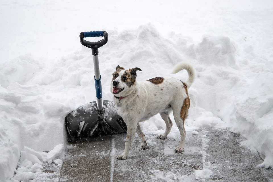 Do Dogs Need Coats in the Winter?