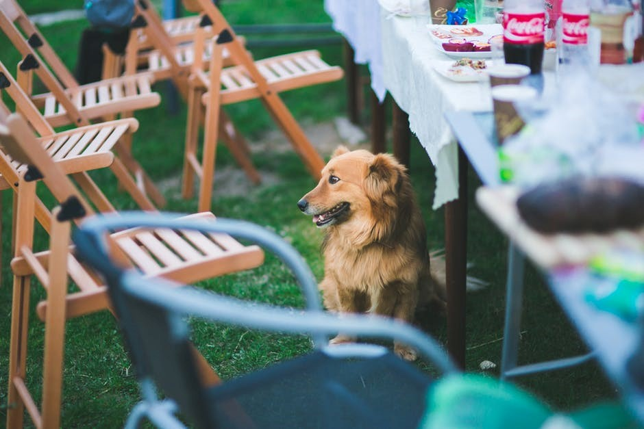 Stress-Free Picnics with Your Dog