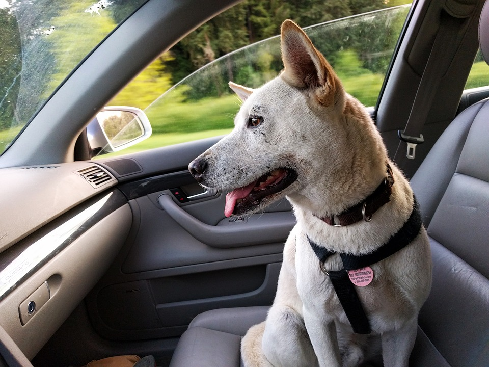Pets & Road Trips – Tips to make it Enjoyable for All
