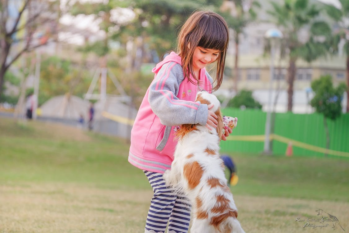 Positive Reinforcement is Key to Dog Training