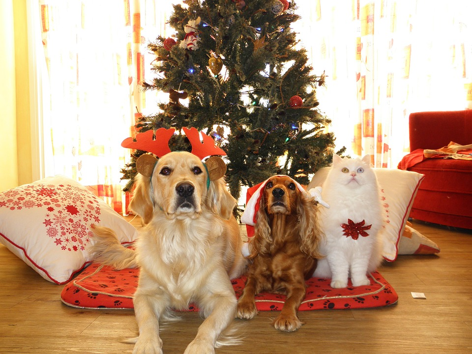 5 'Paw-some' Gift Ideas for Pets this Holiday
