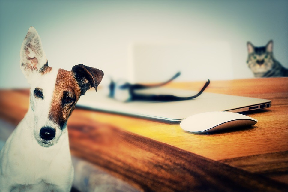 Pet Products Industry Heats Up: Top Must-Haves and Splurge Items