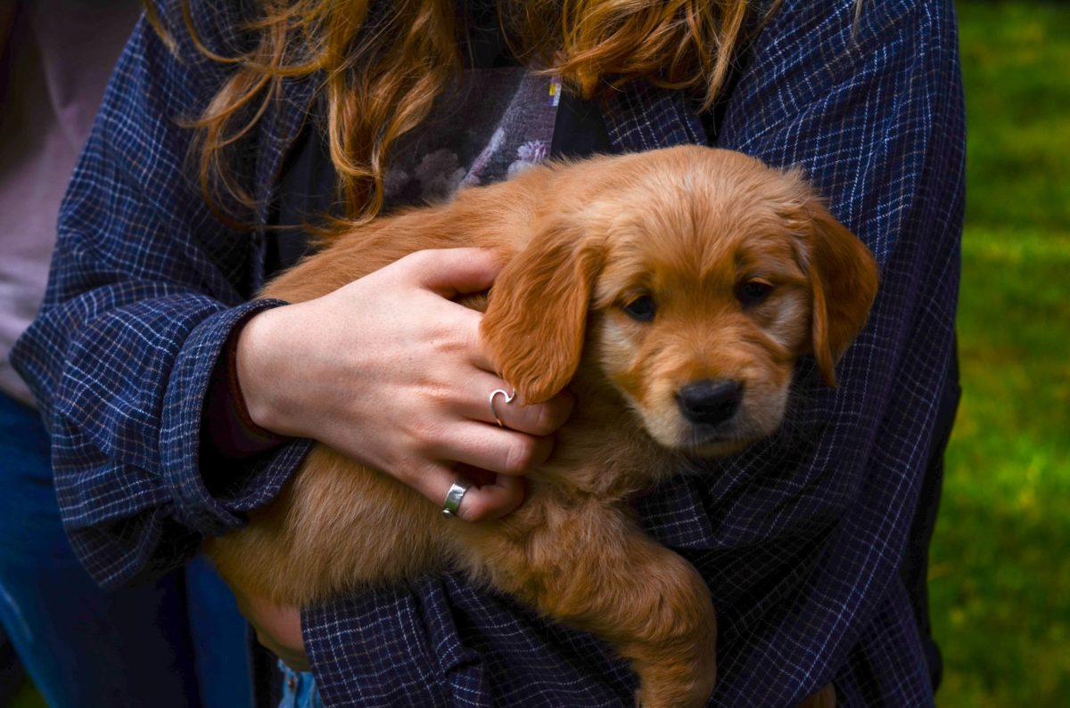 3 Things to Do As Soon as You Bring a Puppy Home