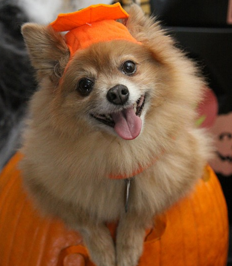 Celebrate Halloween with your Dog