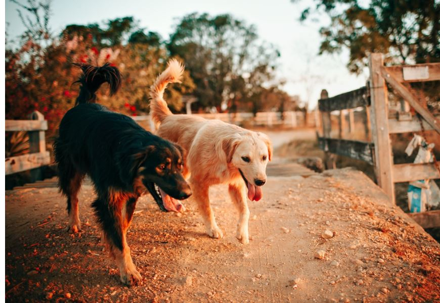 Resolve for Pet Health in 2020