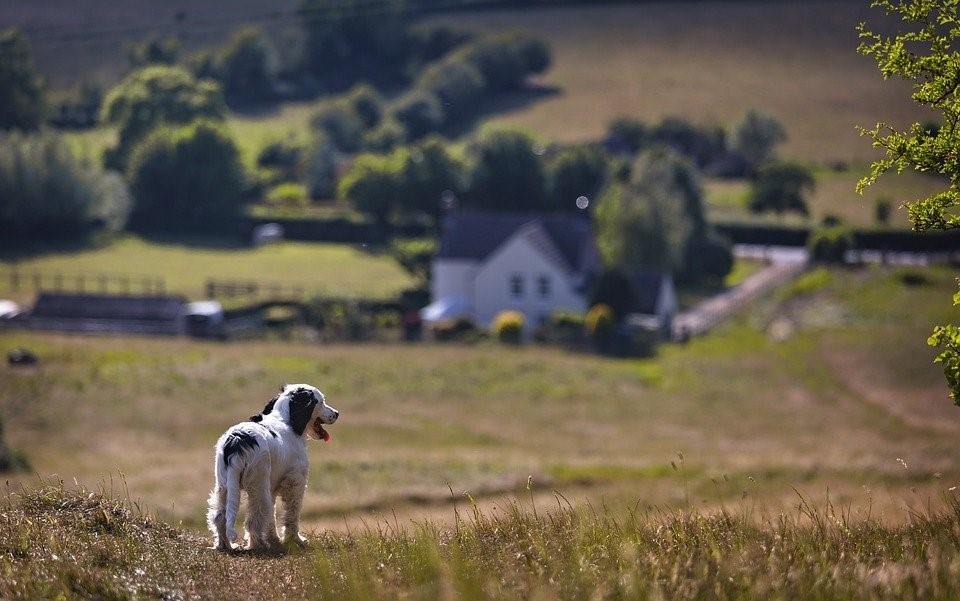 Don't Let Fleas & Ticks Ruin Your Pet's Summer