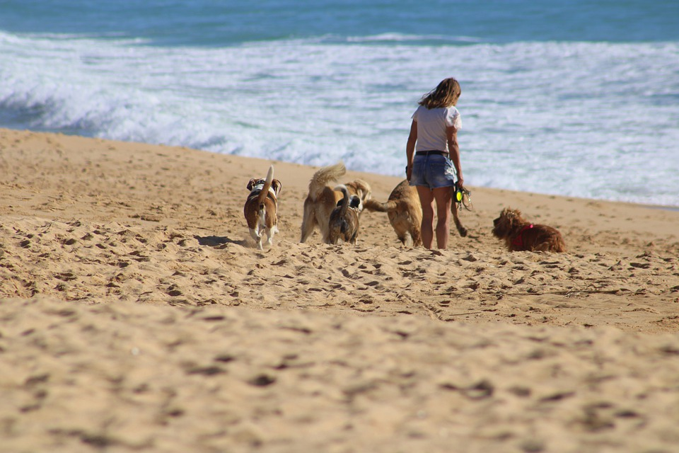Beach Safety Tips for Dogs