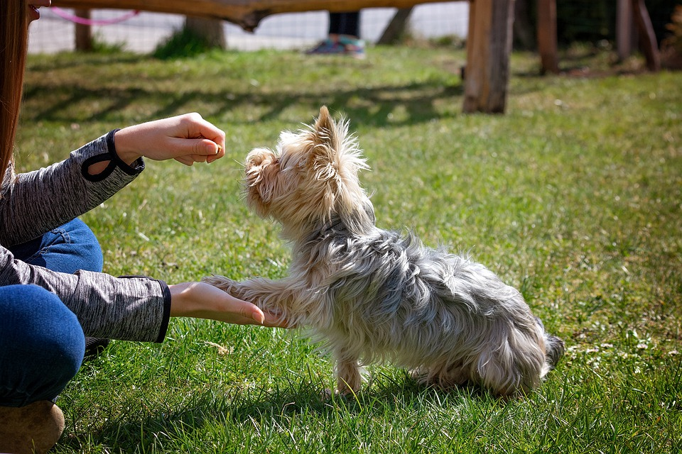 Research Reveals New Information on Dog Training Tactics