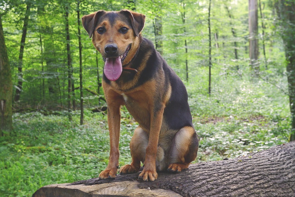 3 Basic Commands Every Dog Should Know