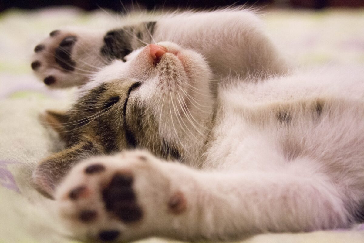 4 Tips for Keeping Indoor Cats Comfortable