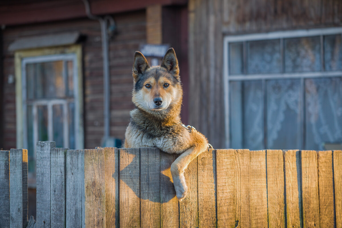 The Differences Between Wireless and In-Ground Dog Fences