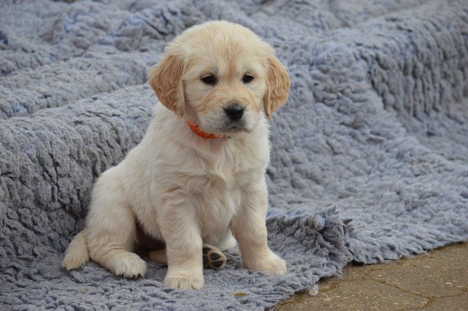 Most Popular Dog Breeds in CT and MA for 2021