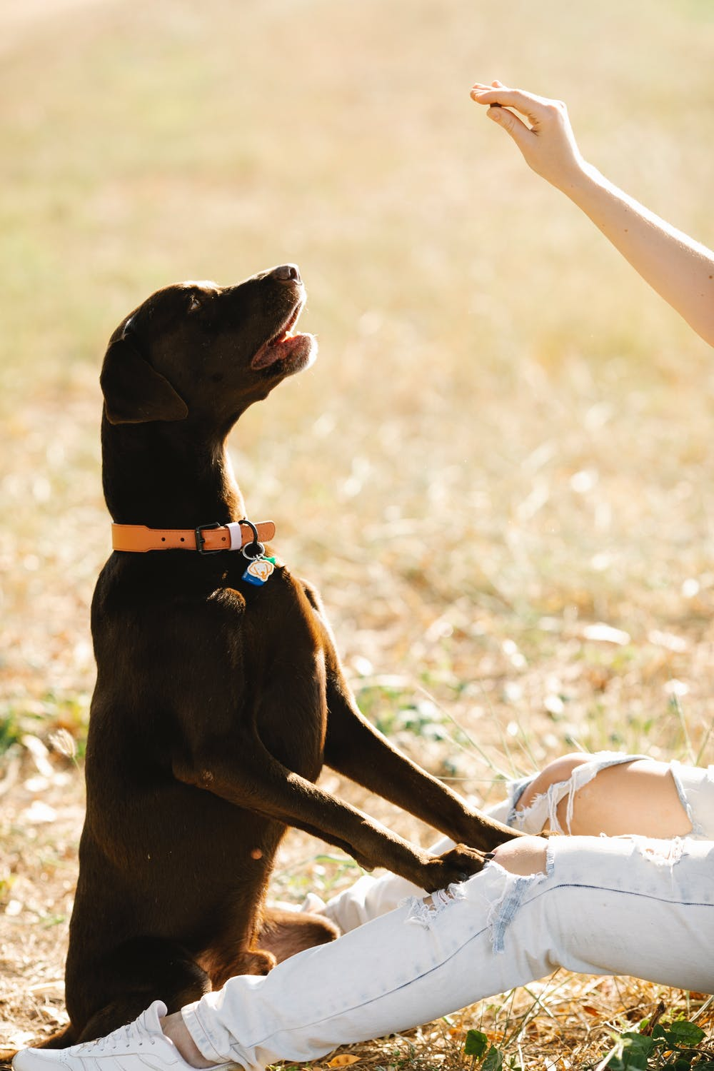 3 New Trends in Dog Training