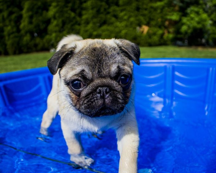 Keeping Your Doggy Cool Outside During the Hot Summer Months