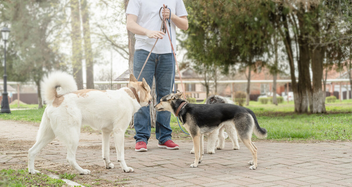 Tips for Socializing Your Dog with Boundaries