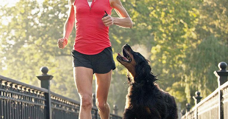 Dog Obedience Training & Perimeter Training | DogWatch of
