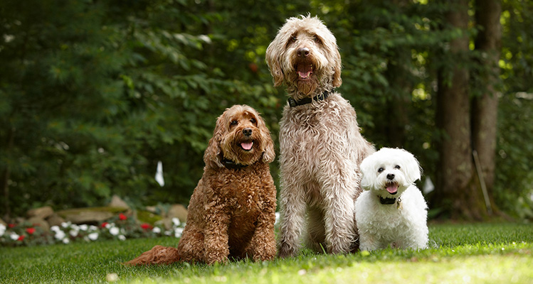 Three Dogs from Small to Large